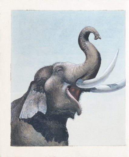 Stock Photo: 1788-29141 Elephant, illustration  Zoology, Mammals, Proboscidea