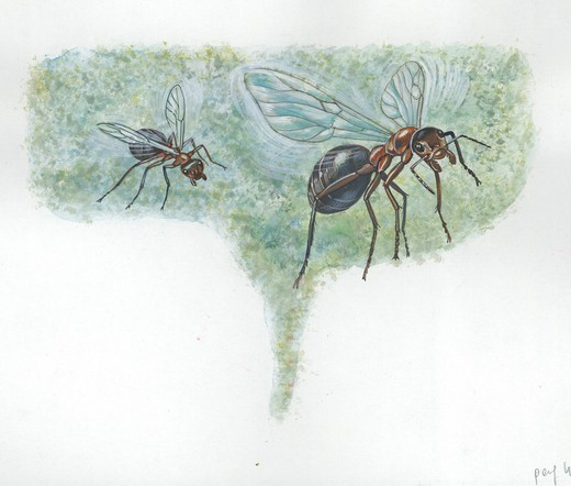 Southern wood ants or horse ants (Formica rufa) during nuptial flight, illustration. : Stock Photo
