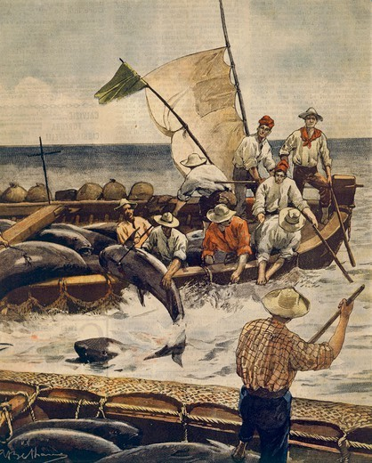 Stock Photo: 1788-30852 Extraordinary bluefin tuna fishing at Piana Island, Sardinia. Illustrator Achille Beltrame (1871-1945), from La Domenica del Corriere, 30th June 1900.