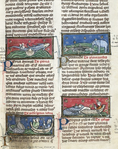 France - 13th century - Albertus Magnus, On the Nature of Things (De Natura Rerum). Illuminated manuscript from Saint-Amand Abbey. Folio 116, recto: Sea Monsters : Stock Photo