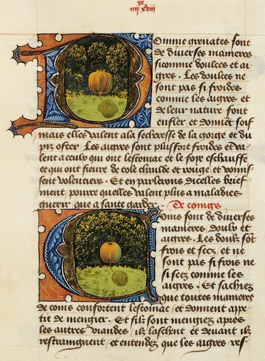Stock Photo: 1788-33951 Page with illuminated initial capital letters with fruit (quince), miniature from the Treaty of Medicine by Aldebrande of Florence, manuscript,1356, Italy.