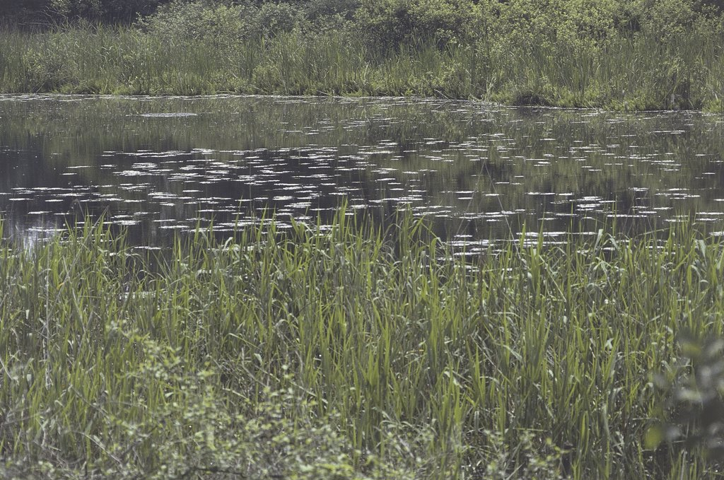 Stock Photo: 1788-3426 Italy - Lombardy Region - Lombard Park of the Ticino Valley - Pond