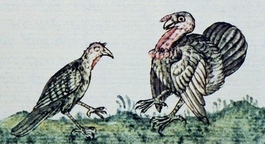 Stock Photo: 1788-41740 Artwork depicting a pair of turkeys, from a copy of the Code of Florence General History of the Things of New Spain by Fra Bernardino de Sahagun, Manuscript in Spanish and Nahuati, mid-16th Century.