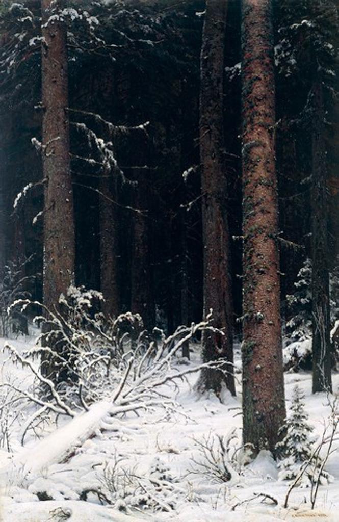 Spruce forest in winter, 1884, by Ivan Shishkin (1832-1898). : Stock Photo