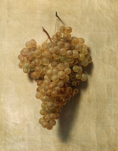 White grape, by Louis Leopold Boilly (1761-1845). : Stock Photo