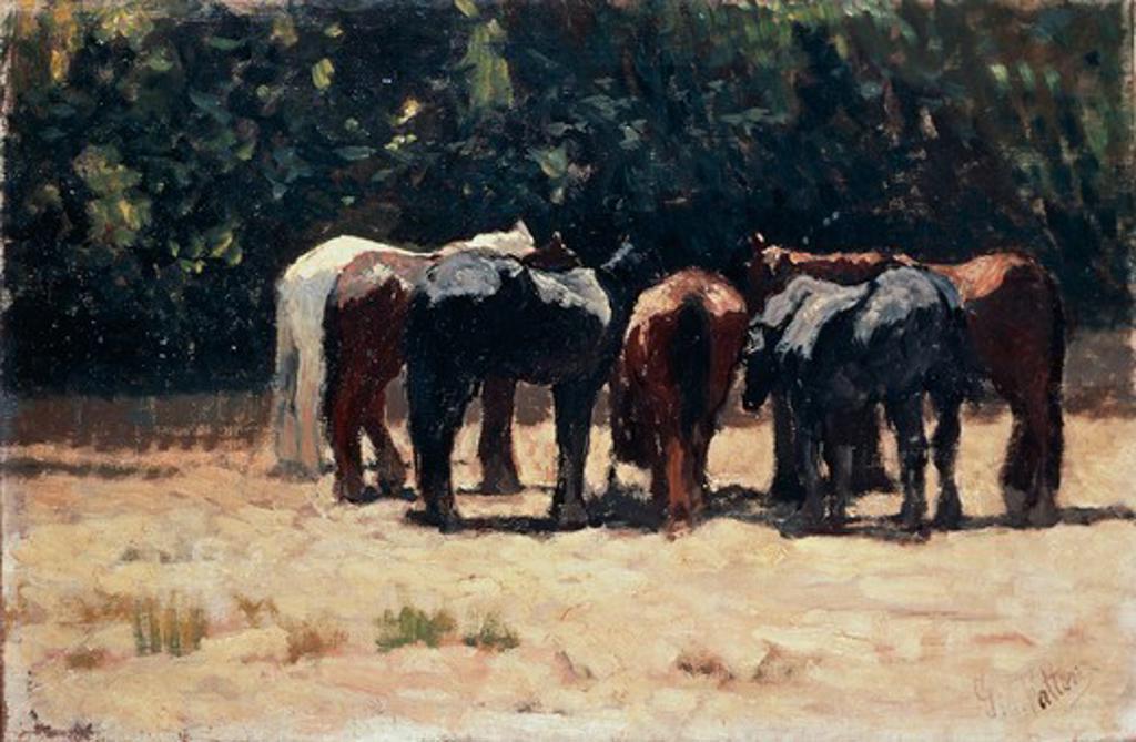 Stock Photo: 1788-49937 Horses in the sun, ca 1880, by Giovanni Fattori (1825-1908), oil on panel, 32.5x49.5 cm.
