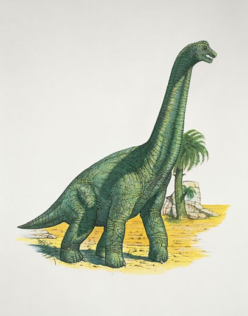 Stock Photo: 1788-5078 Brachiosaurus dinosaur in a forest