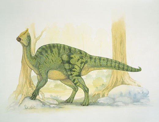Side profile of a dinosaur : Stock Photo
