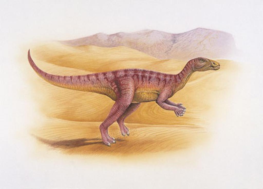 Side profile of a dinosaur : Stock Photo