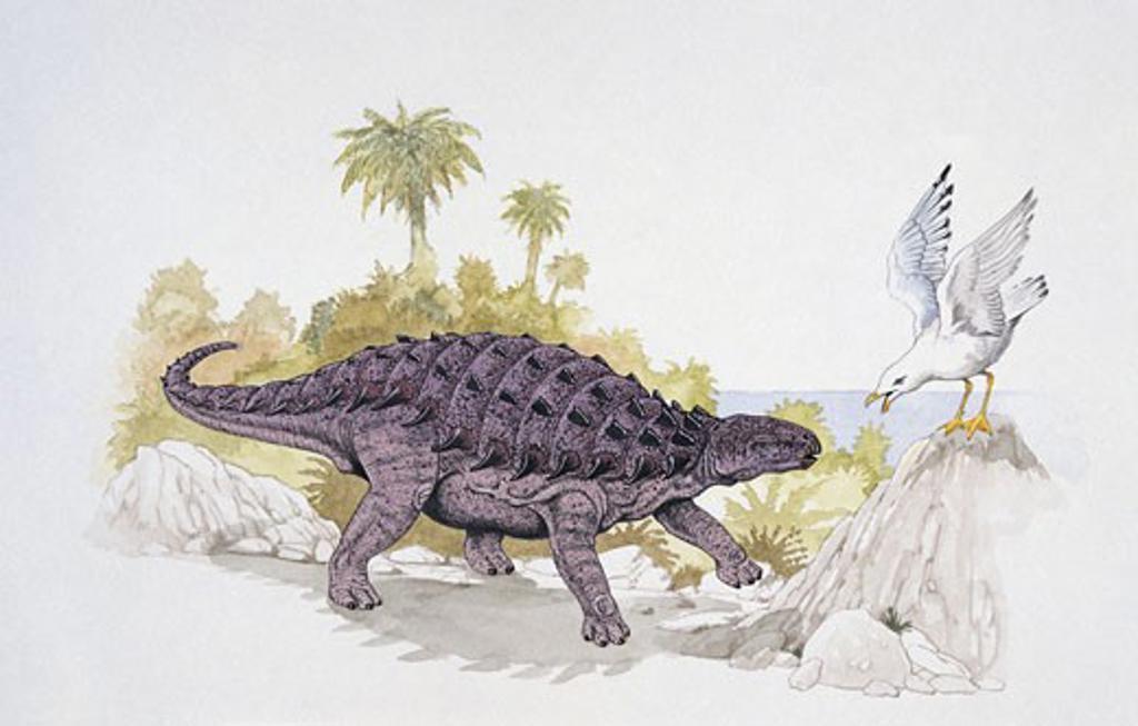 Stock Photo: 1788-5229 Struthiosaurus dinosaur confronting a bird