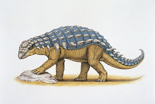 Side profile of a panoplosaurus dinosaur (Panoplosaurus mirus) : Stock Photo