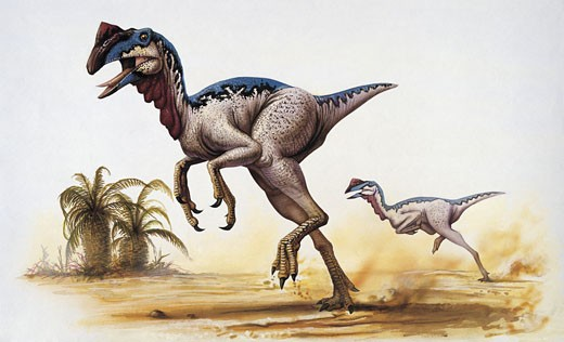 Two chirostenotes dinosaur running : Stock Photo