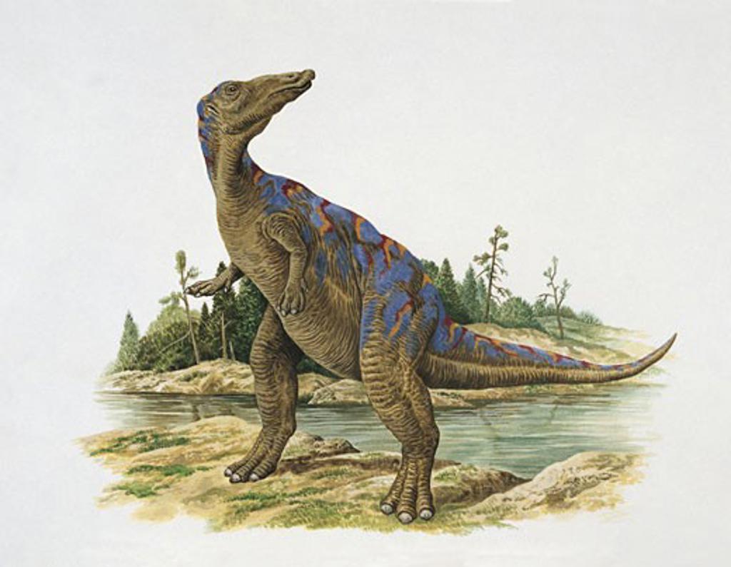 Stock Photo: 1788-5275 Dinosaur standing on a riverside
