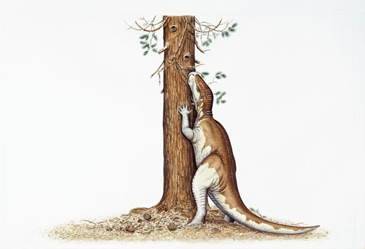 Stock Photo: 1788-5483 Illustration representing Camptosaurus eating leaves from tree