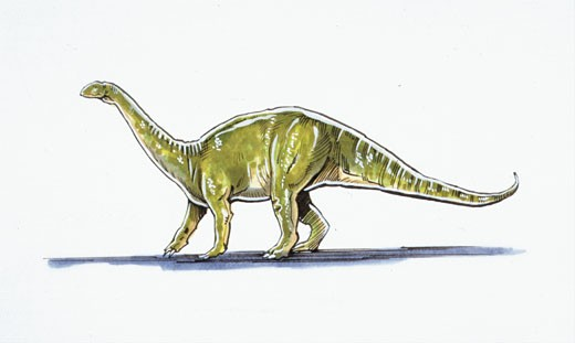Illustration of Melanosaurus : Stock Photo