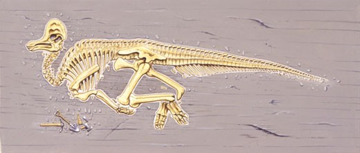 Illustration of Skeleton of corythosaurus : Stock Photo