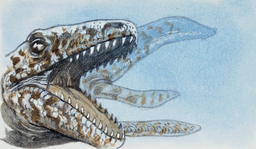 Stock Photo: 1788-58416 Specimen of extinct reptile whose fossilized teeth have been found. Drawing.