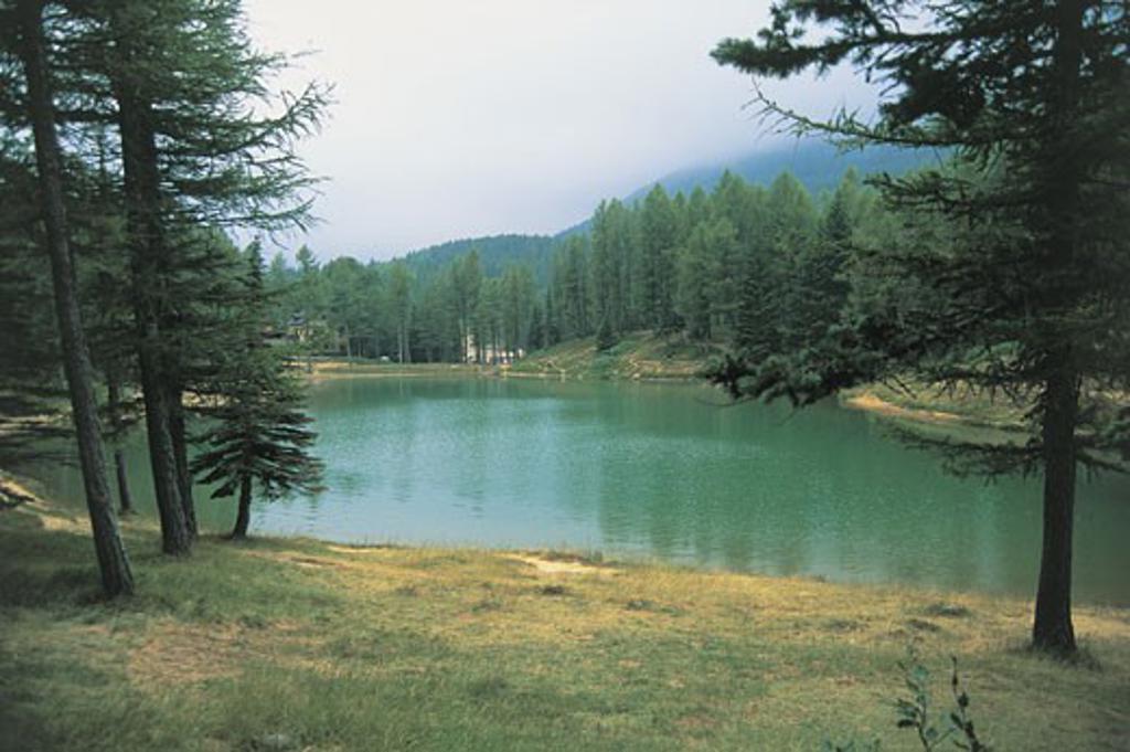 Trees at a lakeside, Nymph Lake, Tuscan-Emilian Apennines, Emilia-Romagna, Italy : Stock Photo
