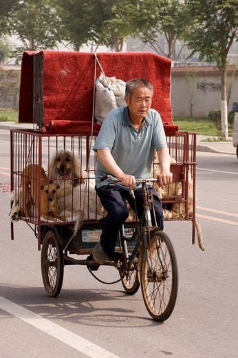 China, Beijing, the Dong Feng Xin dog market : Stock Photo