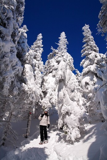 Canada, Quebec Province, Estrie Region, Mont Megantic National Park, forest and snow covered trees, snowshoe hikers, woman : Stock Photo