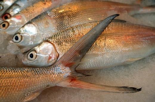 France, French Polynesia, Society Islands, Tahiti, Papeete, fish at the municipal market : Stock Photo