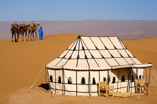 Morocco, Great South, Chigaga Dunes, Iriki, surroundings of Mhamid, Camp Nomade des Dunes Resort, nomad with his camels : Stock Photo