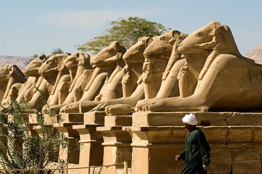 Egypt, Upper Egypt, Upper Egypt, Nile Valley, Luxor, Karnak listed as World Heritage by UNESCO, temple dedicated to Amon God, criosphinx alley lion body with the head of a ram, Amon sacred animal, between his kegs Ramses II with Osiris characteristics : Stock Photo