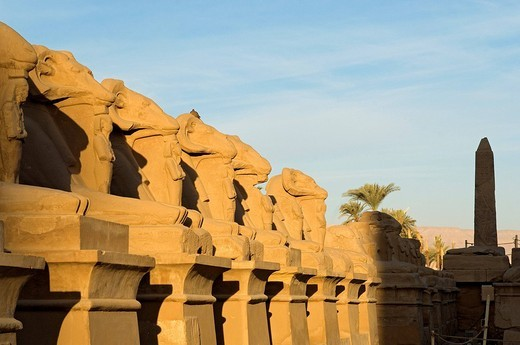 Egypt, Upper Egypt, Nile Valley, Luxor, Karnak listed as World Heritage by UNESCO, temple dedicated to Amon God, criosphinx alley lion body with the head of a ram, Amon sacred animal, between his kegs Ramses II with Osiris characteristics : Stock Photo