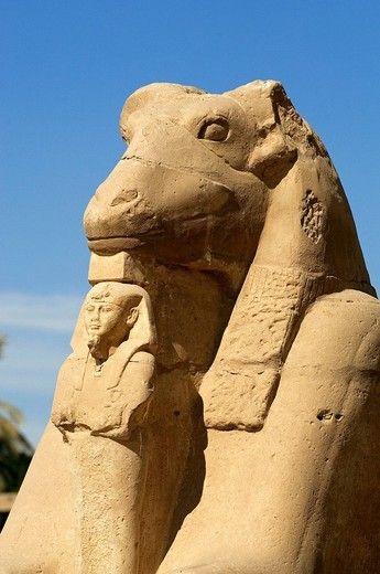 Stock Photo: 1792-112537 Egypt, Upper Egypt, Nile Valley, Luxor, Karnak listed as World Heritage by UNESCO, temple dedicated to Amon God, criosphinx alley lion body with the head of a ram, Amon sacred animal, between his kegs Ramses II with Osiris characteristics