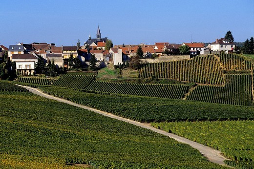 France, Marne, the Cote des Blancs, scenic road of the Champagne region, south of Epernay which spreads over 15 km : Stock Photo