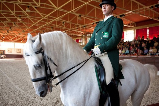 Stock Photo: 1792-114934 Slovenia, Kras region, Lipica, Lipizzans horses, dressage at the National Stud Farm