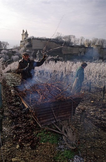 France, Indre et Loire, Chinon, the castel and the wineyards, Chateau de l´Echo AOC, cutting of the vien and burnout of the vine shoot in Winter : Stock Photo