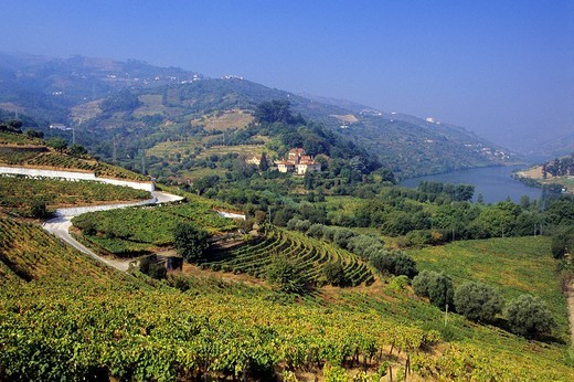 Portugal, Norte region, Douro Valley, listed as World Heritage by UNESCO, alongside the Douro river, the Douro Valley is one of the richest of the country with its terraced agriculture : Stock Photo