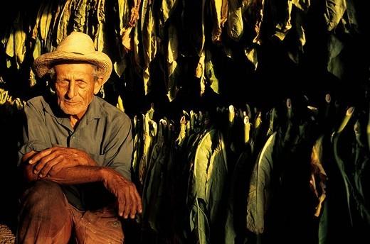 Stock Photo: 1792-120220 Cuba, Villa Clara Province, portrait of a tabocco planter in a tabocco barn