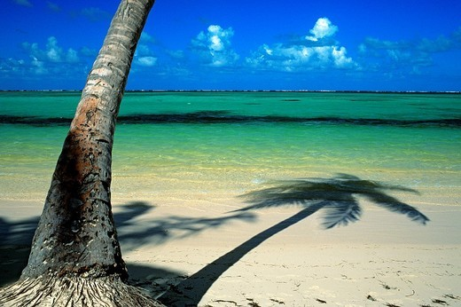 Dominican Republic, Altagracia province, Punta Cana, Playa Bavaro, coconut tree shadow on the beach : Stock Photo