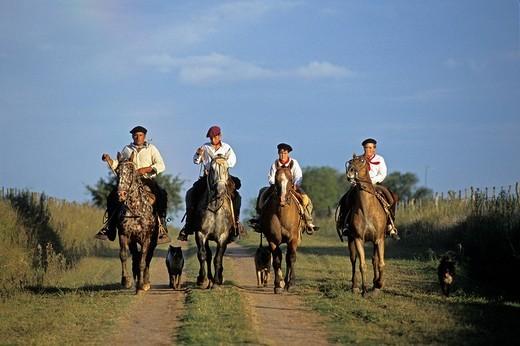 Argentina, Buenos Aires Province, San Antonio de Areco, Estancia El Ombu de Areco, back from pasture lands fo the Pampa gauchos on their Criollo horses : Stock Photo