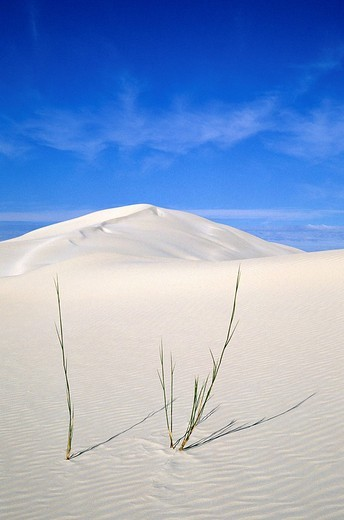 South Africa, Western Cape Westkaap, De Hoop Natural Park, dunes on the coast : Stock Photo