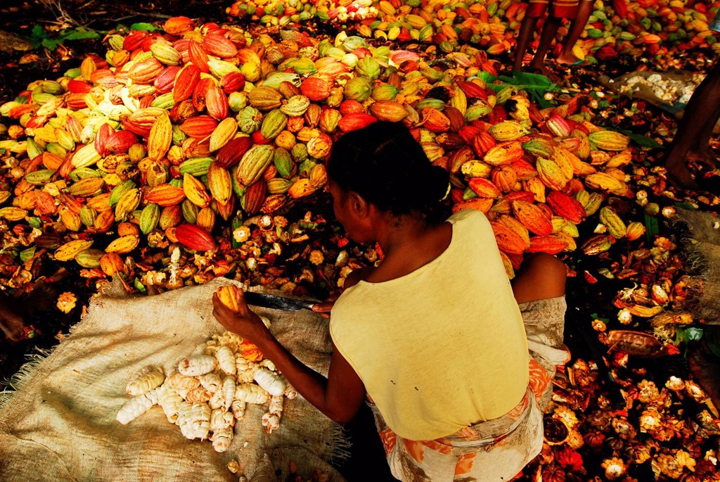 Stock Photo: 1792-126779 Madagascar, North, Diego_Suarez Province Antsiranana, Diana Region, Ambanja, black woman peeling cacao beans with machete