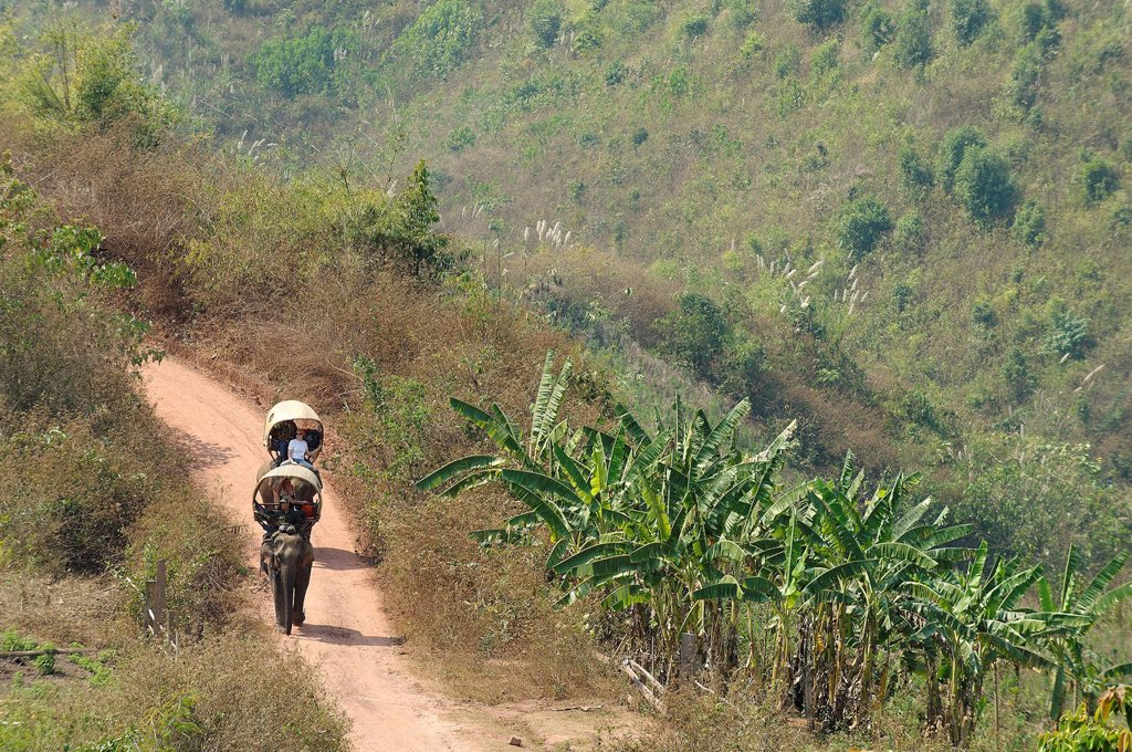 Laos, Sainyabuli Province, Thanoon, elephants and their mahouts for a trek on a path through the banana : Stock Photo
