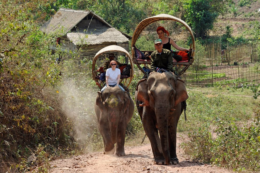 Laos, Sainyabuli Province, Thanoon, trek on elephant´s back, settled on a palanquin, the traveler is seated behind the mahout : Stock Photo