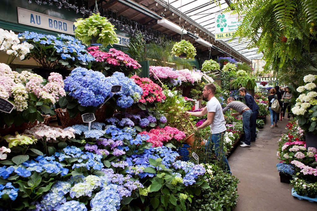 France, Paris, Ile de la Cite, the flower market : Stock Photo