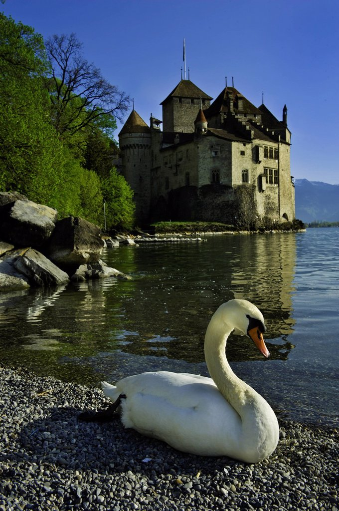 Stock Photo: 1792-130141 Suisse, Canton of Vaud, Leman lake, Chillon castle at the south of Montreux