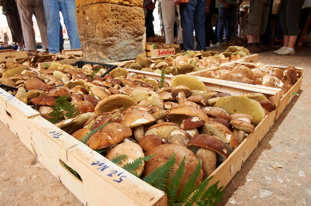 Stock Photo: 1792-135930 France, Dordogne, Monpazier, labeled Les Plus Beaux Villages de France The Most Beautiful Villages of France, the market with Mushrooms