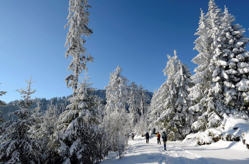France, Haut Rhin, White Lake, Col du Calvaire, snowshoe hikers, forest, snow, winter : Stock Photo