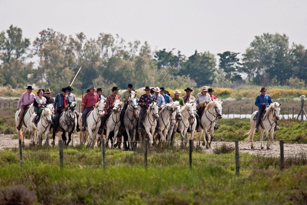 France, Bouches du Rhone, Parc Naturel Regional de Camargue Regional Natural Park of Camargue, Saintes Maries de la Mer, Abrivado on the Feast of the Gypsies : Stock Photo