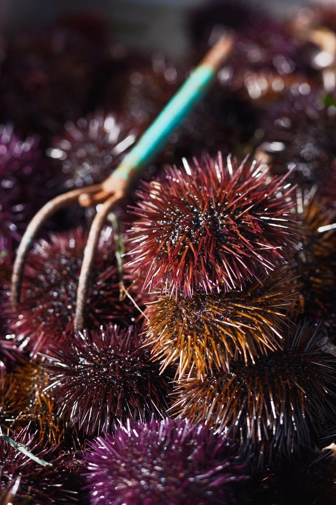 Stock Photo: 1792-140323 France, Corse du Sud, Ajaccio, the fish market, a retail stall urchin