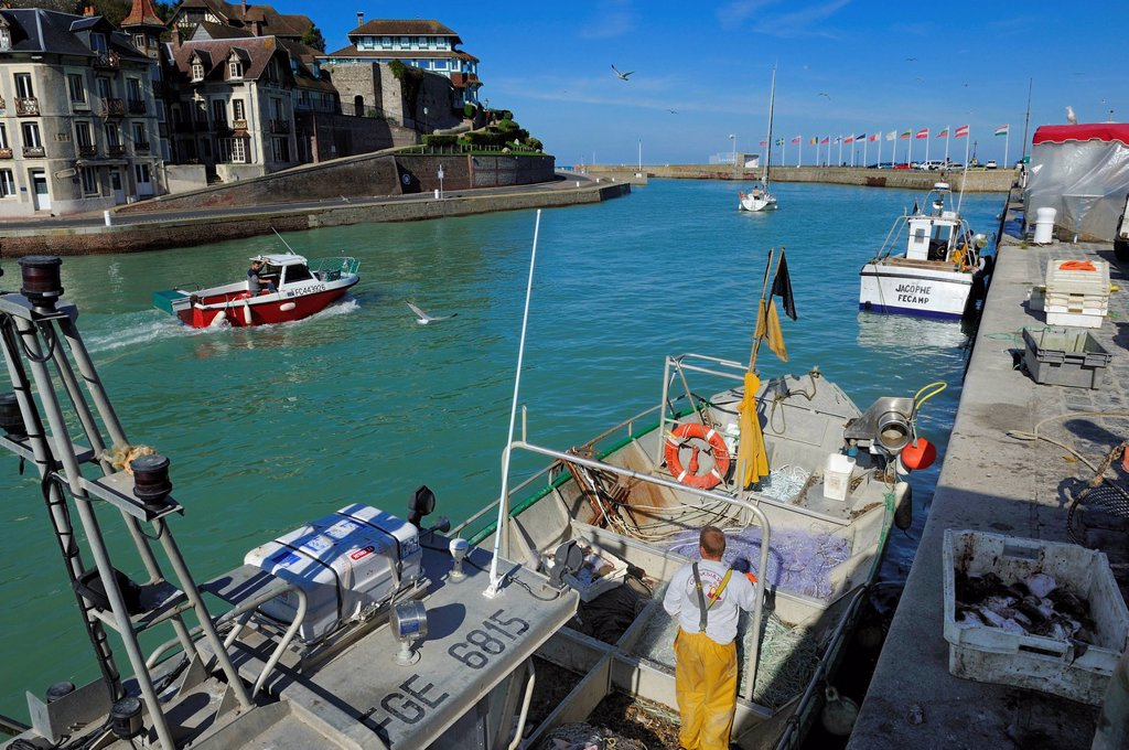 France, Seine Maritime, Saint Valery en Caux harbour, unloading of the catch of the day : Stock Photo