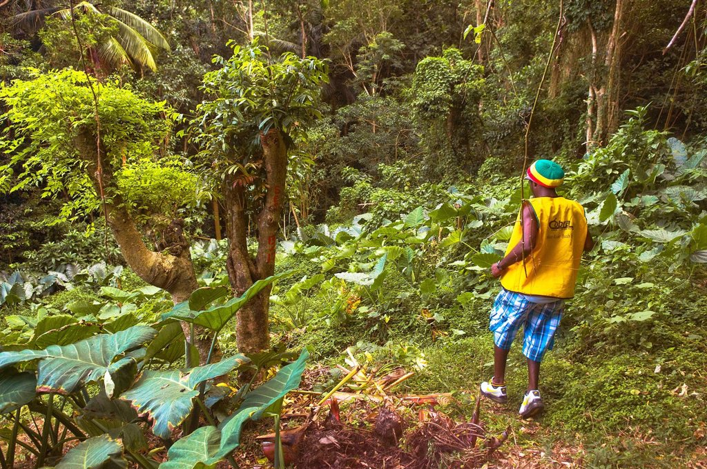 Stock Photo: 1792-142344 Dominica, Northern area of the island, Waitukubuli National Trail, between villages of Capucin and Pennesville, Section 13 of the trekking trail, David, Rasta local trekking guide