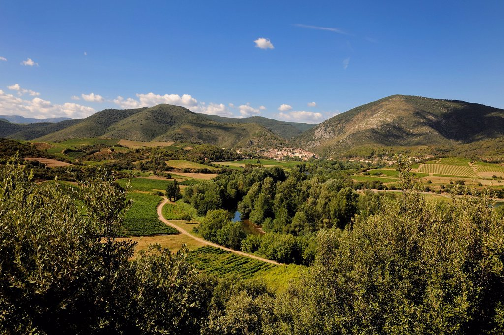 Stock Photo: 1792-144750 France, Herault, Orb Valley, village of Roquebrun in the distance and AOC Saint Chinian and Roquebrun