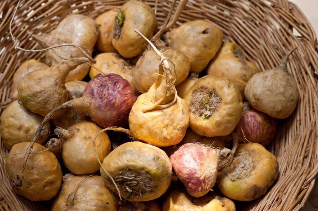 Peru, Cuzco province, maca Lepidium meyenii Walpers, known as the Peruvian viagra because this tuber boost libido : Stock Photo
